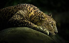1600x1200 baby cheetah 30514 1600x1200 px hdwallsource