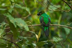 The Best Bird Watching Experiences That You Must Not Miss In Costa Rica,  Enjoy birding experience in Costa Rica