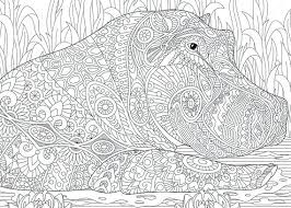Hippo Coloring Pages