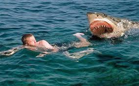 shark attack wallpaper.  Shark Shark Attacks Human Latest Photos With Attack Wallpaper H