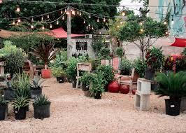 our midtown garden center adventure