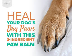 heal your dog s dry paws with this 3 ing paw balm