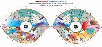 Iridology Diagnosis Chart What Is Iridology Diagnosis Chart Iriscope Iridology