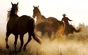 wild horses mustang wallpaper. To Wild Horses Mustang Wallpaper