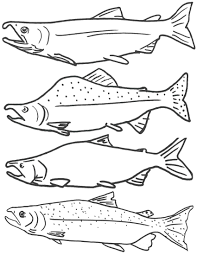 Free Coloring Page Of Salmon Fish Free Printable Fish Coloring