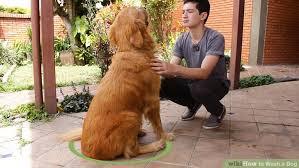 image titled wash a dog step 5