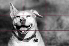 Rule of Thirds in Photography A Guide for Beginners