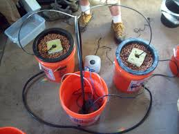 picture of how to make a multiple bucket top feed hydroponic grow system
