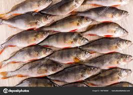 Fishe Stock Fotografie Citr1965 189700920