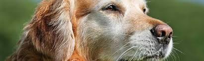 Converting Dog Years To Human Years Chart Dog Age Chart How To Convert Dogs Age Into Human Years