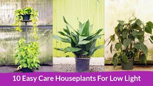 Houseplants For Low Light Areas 10 Easy Care Houseplants For Low Light Joy Us Garden