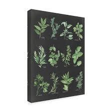 Shop Chris Paschke Herb Chart On Black Canvas Art Multi