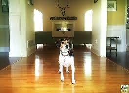 with bona hardwood floor cleaner