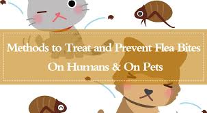 15 Powerful Methods to Treat and Prevent Flea Bites On Humans & On ...