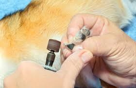 using a dog nail grinder lovetoknow