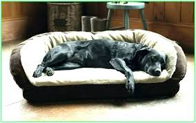 raised dog bed large wooden attractive throughout best elevated