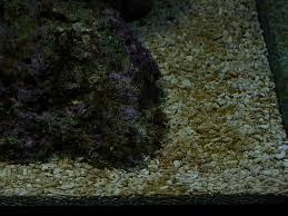 Consiglio acquisto acquario marino sanguefreddo.net