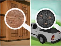 Small Gnats In Kitchen 5 Ways To Get Rid Of Gnats Wikihow
