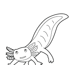 axolotl animal coloring pages