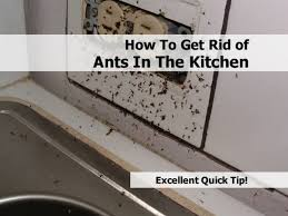 carpenter ants how to get kitchen how to get rid of ants in the kitchen very tiny ants in kitchen