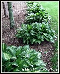 deer repellent for gardens. Deer Deterrent For Gardens Eatg Scrapg Plants Garden Natural Repellent D