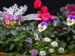 use colorful and fragrant plants for winter container gardening