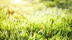 spring nature backgrounds. Spring Nature Background With Green Grass Backgrounds S