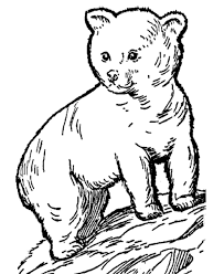 Wild Animal Coloring Pages Young Bear Cub Coloring Page And Kids