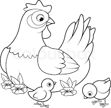 Small Picture Coloring page of mother hen with its baby chicks Stock Vector