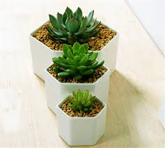 Great Idea For Small Plants!Simple Hexagon Ceramic Flower Pot,White  Succulents Planter Flowerpot Vase For Gift Home Decoration-in Flower Pots &  Planters ...