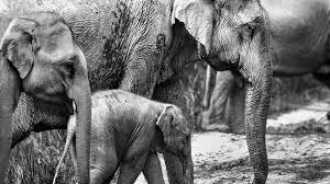 Animal Elephant 4K HD Wallpapers