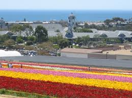 highlights for the carlsbad flower fields