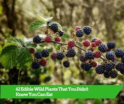 62 Edible Wild Plants That You Didnt Know You Can Eat – Matter Of Trust