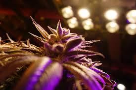 What Effect Does <b>Far</b>-<b>Red</b> Light have on Plants? | Ursa Lighting