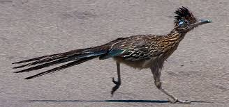 Image result for road runner