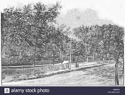 the garden in pine grove cemetery lynn 1886