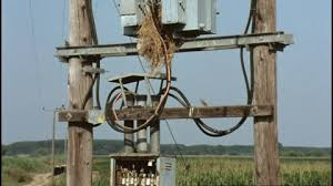 house sparrow nest electrical box hd stock video fuse box electrical box house sparrow power supply line power pole