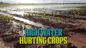 High Water Hurting Crops - YouTube