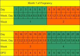 Pregnancy By Weeks Calendar How Long Is Pregnancy Days Weeks Months Trimesters Parenting Patch