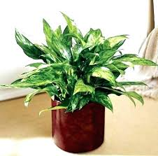 best low light office plants. Low Maintenance Indoor Plants Good Office Must See Design . Best Light