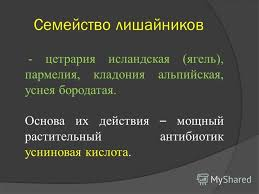 Презентация на тему Курсовая работа по фармакогнозии Тема  8 Семейство лишайников