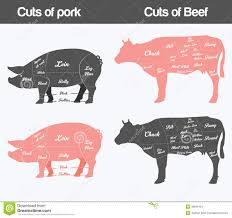 Pork Chart Cuts Of Meat Illustration Of Beef Pork Cuts Chart Stock Vector