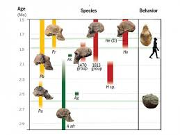 The Traits That Make Us Human Evolved At Different Times
