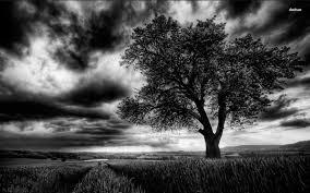 Dark tree on the field HD wallpaper ...