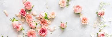 26 types of pink flowers tips