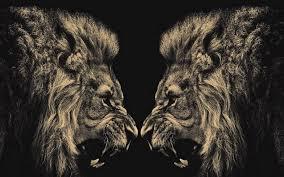 lion wallpaper hd 12 1920 x 1200