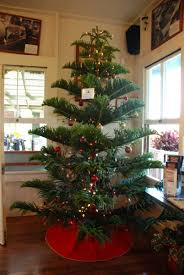 Christmas In Hawaii  Toby NealChristmas Tree Hawaii