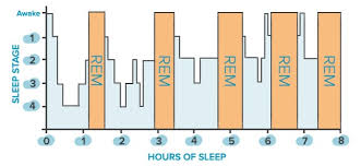 Rem Sleep Chart Sleep Cycle Stages Chart Www Bedowntowndaytona Com