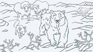 Small Picture Himalayan Animal Coloring Pages Ragdoll Breed Cat Online Coloring