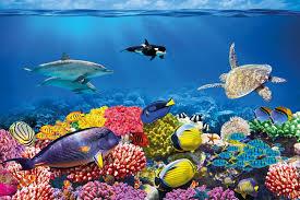 Sott  acqua barriera corallina fotomurale acquario pesci mar e